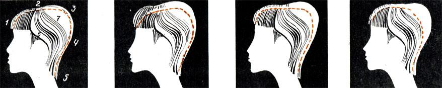 Рис. 76. Наименование частей прически профильного силуэта и ее расположение относительно различных контуров головы: 1 - лобная; 2 - теменная; 3 - макушечная; 4 - затылочная; 5 - линейная; 6 - височно-боковая; 7 - боковая